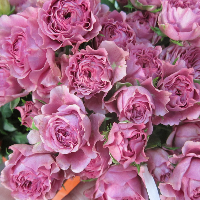 Spray Roses: Value for Money